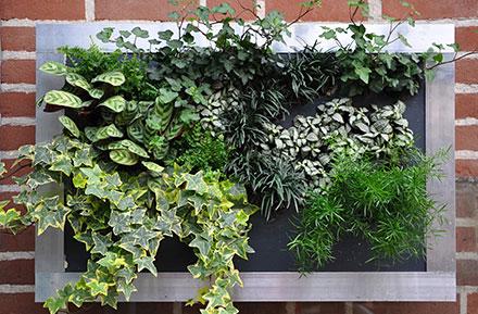 Verticaal groeisysteem levend groen aan de muur quick plug for Planten schilderij intratuin